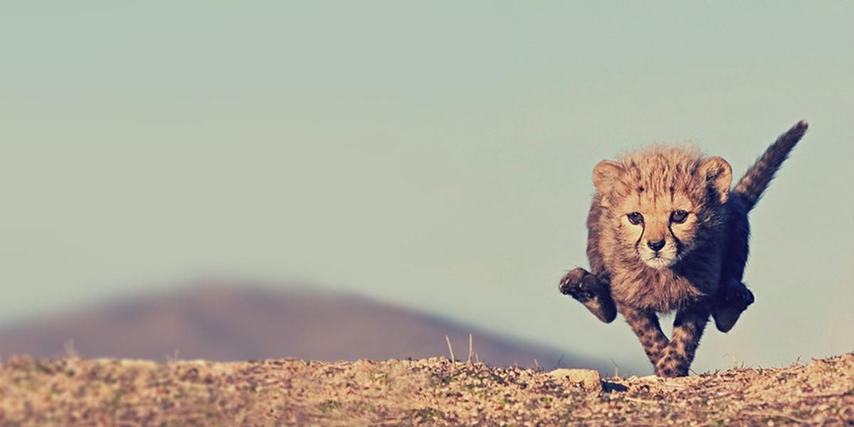Little Cheetahs l 300+ Muhteşem HD Twitter Kapak Fotoğrafları