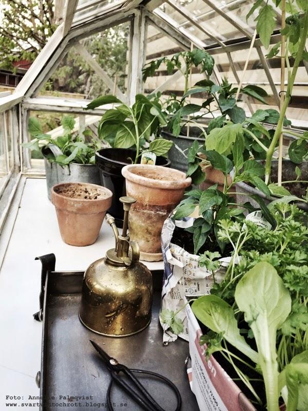 industriellt växthus, på hjul, krukor, grönsaker, växter, tomater, sallad, gurka, paprika, chili, örter,