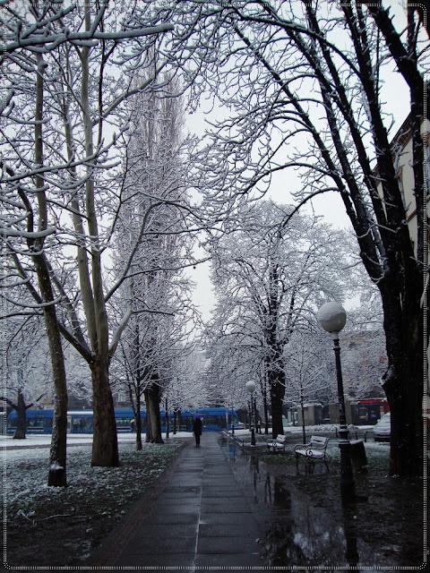 snijeg na stablima