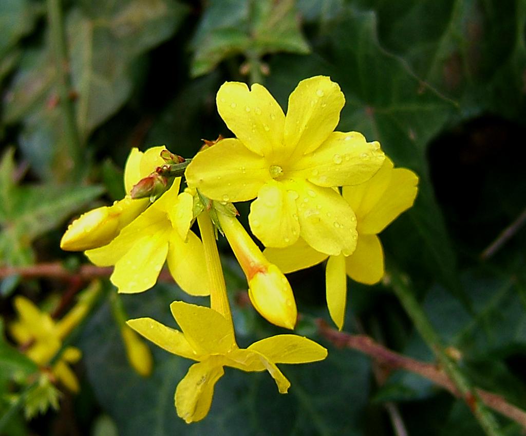 novembre 2012 ~ Il mio giardino fiorito
