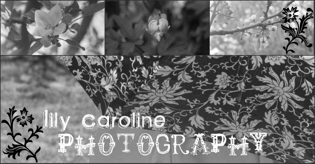 Lily Caroline Photography