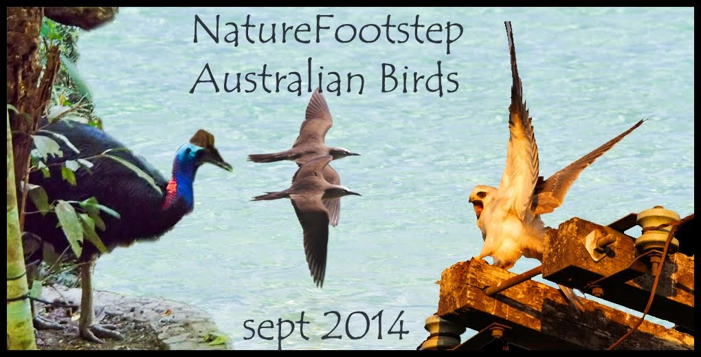 NatureFootstep Australian birds