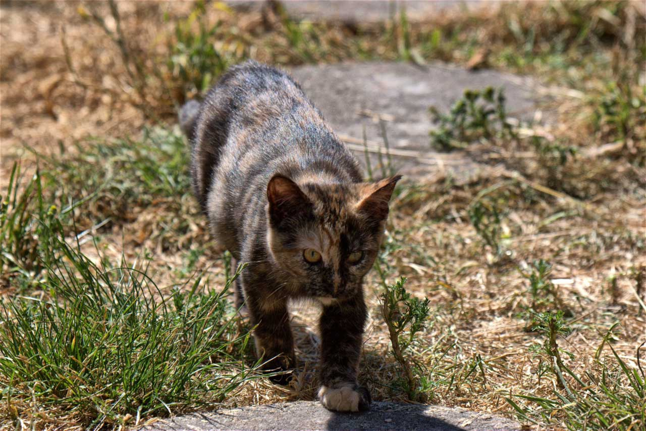 Georgia Feral Cat Rescue