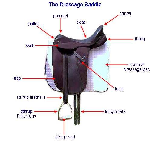 Royal grove stables blog saddle fitting how to fit an english saddle fitting how to fit an english saddle correctly ccuart Choice Image