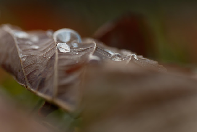 Waterdrops On Fall Leaf