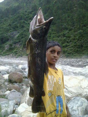 """Résultat de recherche d'images pour """"trout river tirthan"""""""