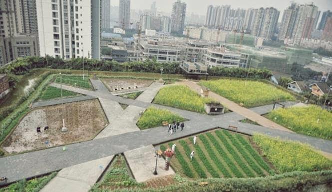 pertanian di atap gedung perusahaan