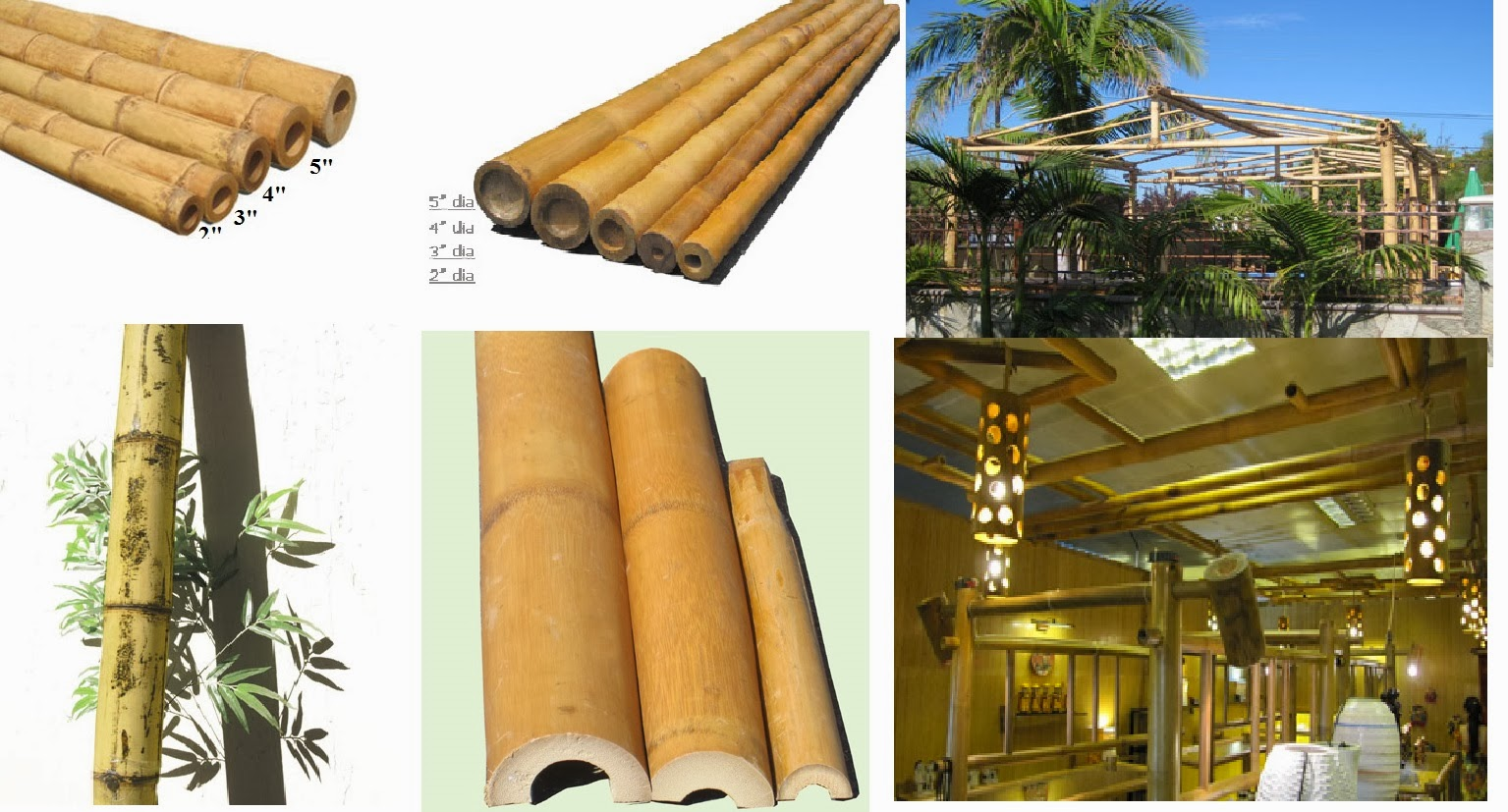 Best bamboo cane pole stake all decor ideas for fences for Home decorating materials