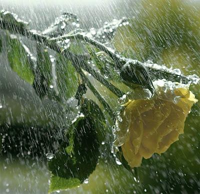 Hujan-Selamat-Datang