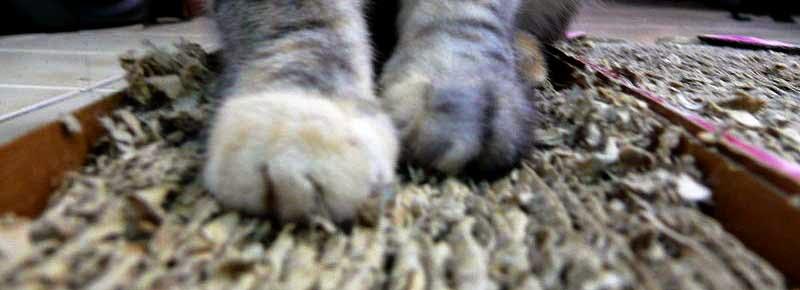 Kucing sedang menggunakan pad cakar