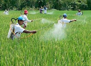 Bhaya Penggunaan Pestisida