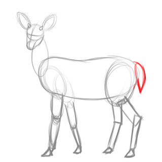 how to draw deer - step 5