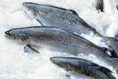 Tasmanian Salmon, Tasmania