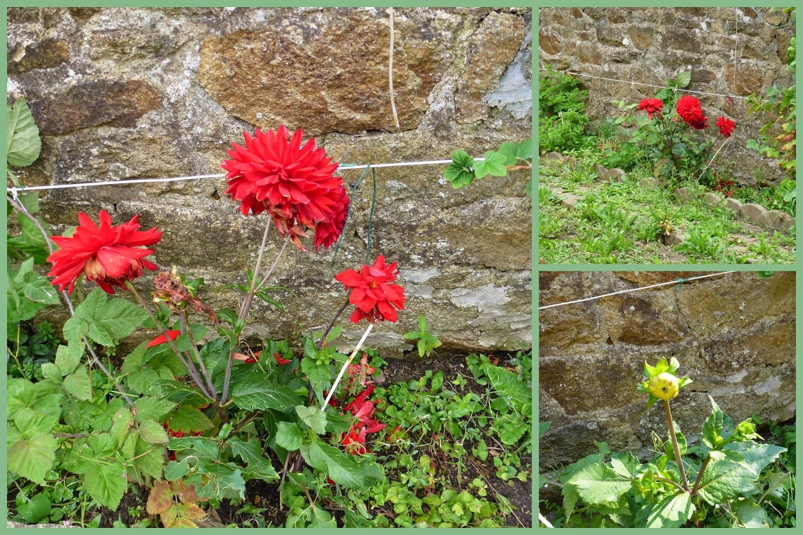 Quatre saisons pour une ann e fleurs d 39 t for Nettoyer feuilles plantes