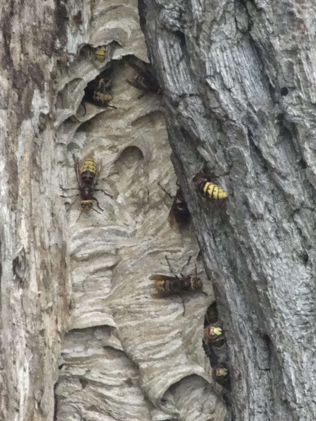 the outdoor traditionalist   hornet nest  words  pics and