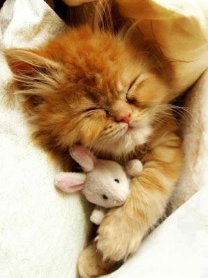 gatito con su peluche dormido