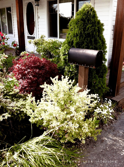 black mailbox inside shrubs