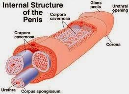 penis jumbo