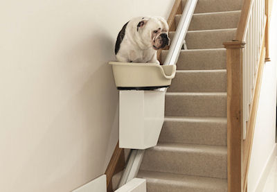 Best Dog Treadmill Reviews