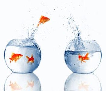 Escalera hasta la luna la pecera de la vida for Peceras con peces