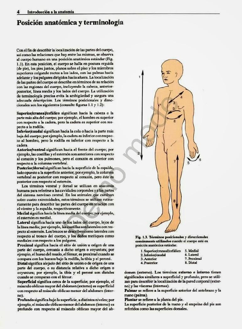 Asombroso Christina Grises Anatomía Bandera - Anatomía de Las ...