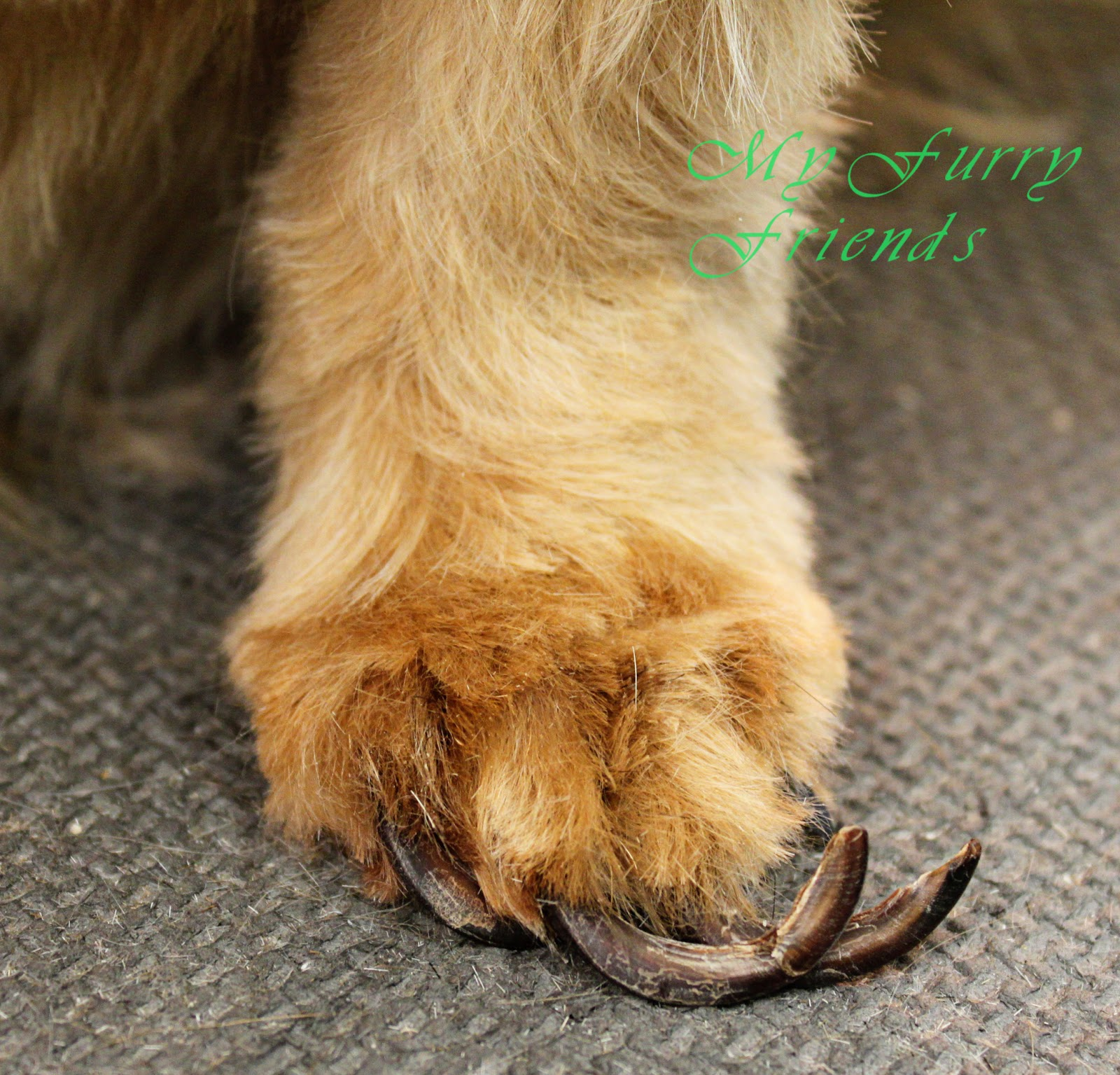 Pet Grooming: The Good, The Bad, & The Furry: NAILS.........GRRRR!