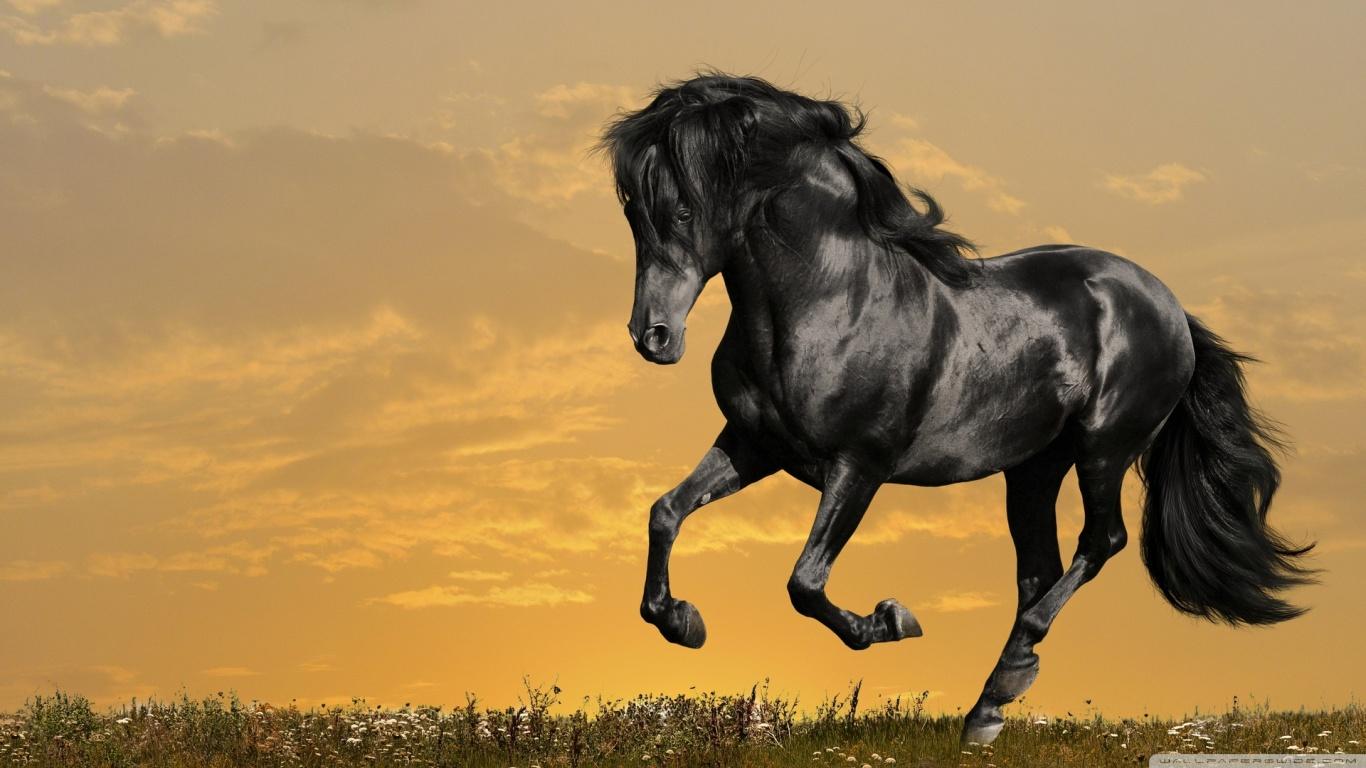 http://4.bp.blogspot.com/-7_rW5ge6KSc/TxpWtnmQh-I/AAAAAAAAE8I/ZER9kv-qOhA/s1600/black_horse_running-wallpaper-1366x768.jpg