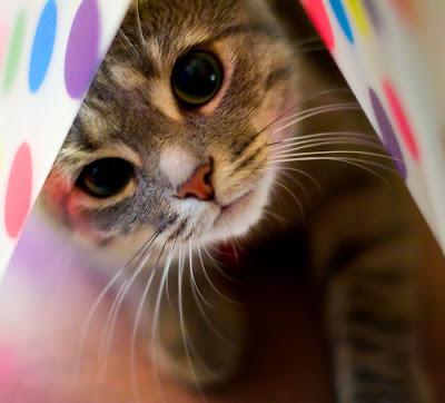 Foto Ekspresi Lucu Kucing
