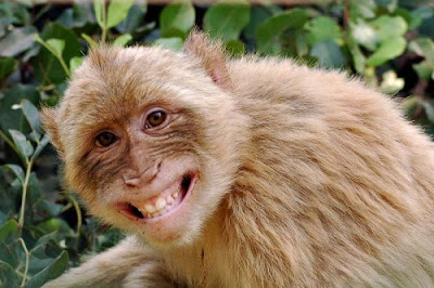 mono+gracioso Imagenes chistosas de animales...