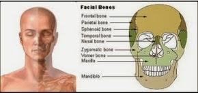 Posisi Tulang pipi manusia