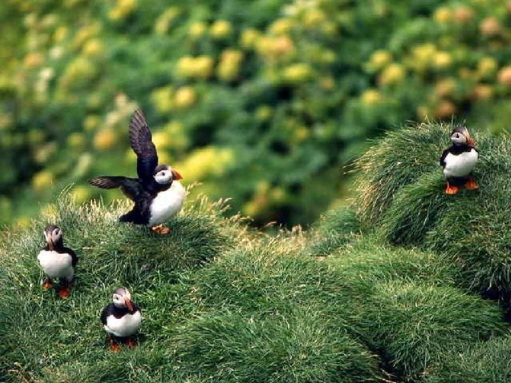 Aves etrañas