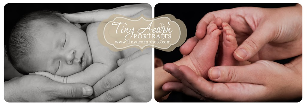 Newborn Photographer Minneapolis
