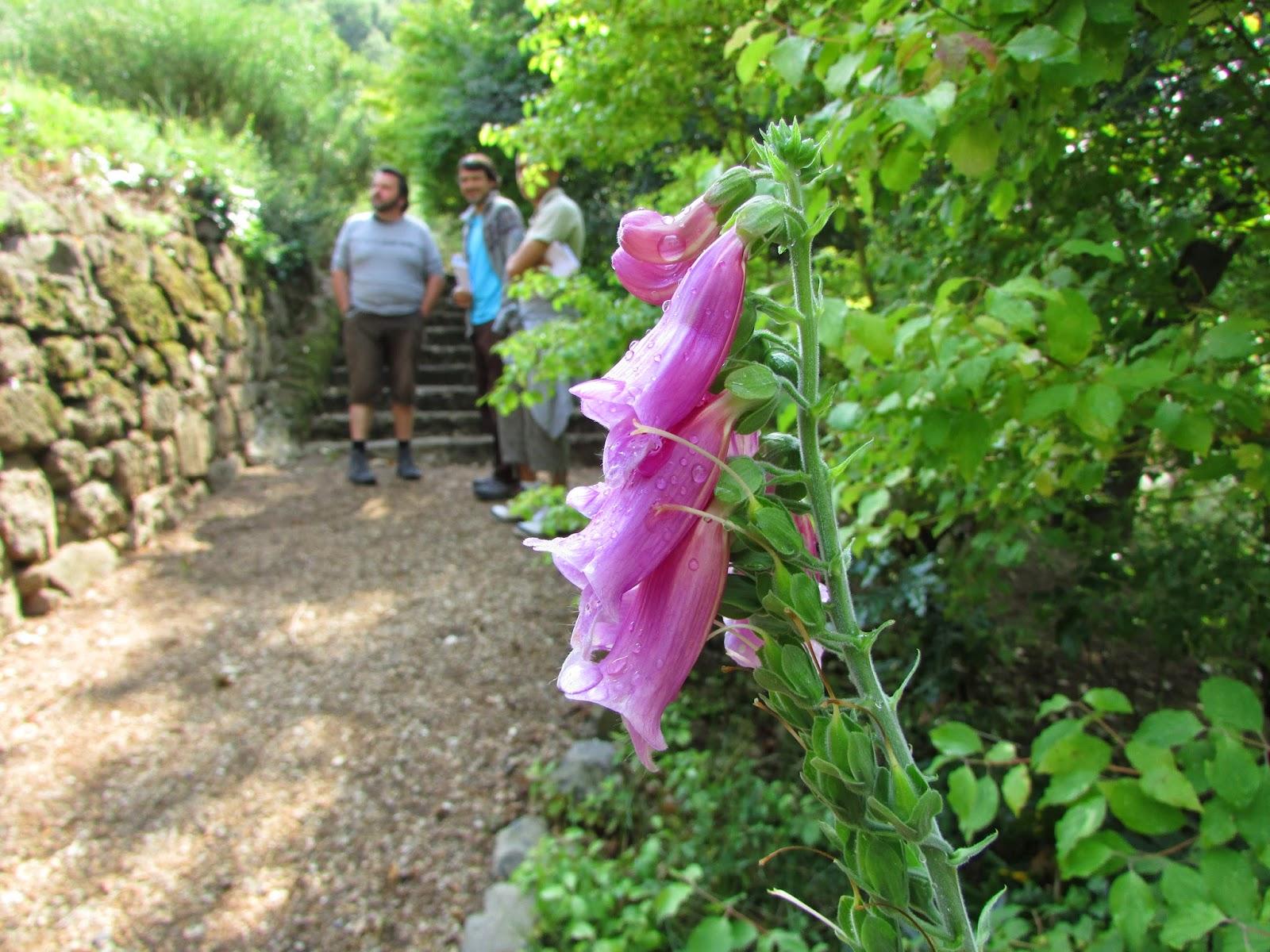 Jardin partag fdb visite dans le jardin d 39 orbeil for Jardin 63