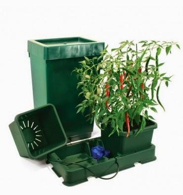 Plantas, Como Regar