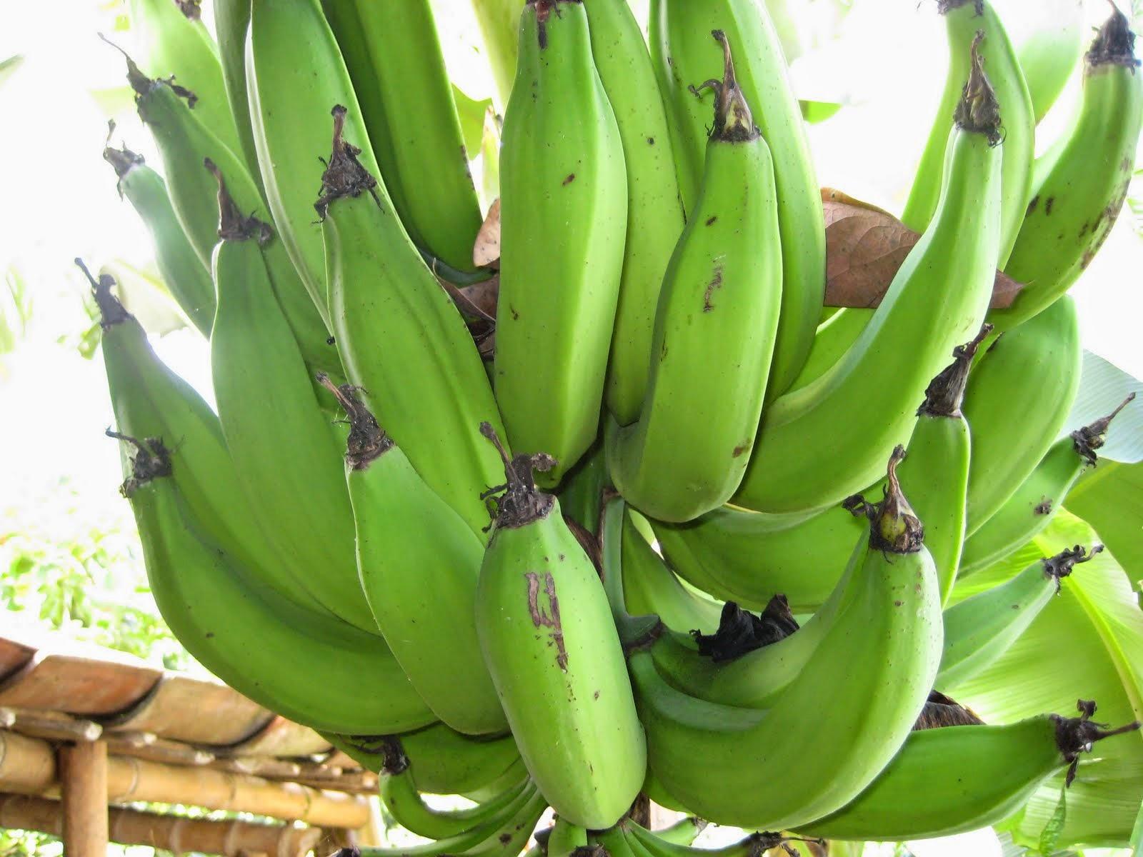 Clasificacion de las plantas for Hojas ornamentales con sus nombres