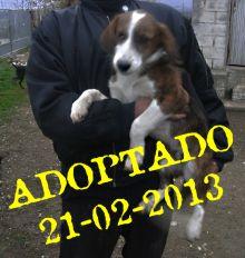 Tukan adoptado