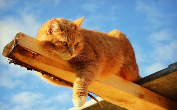Рыжиий кот