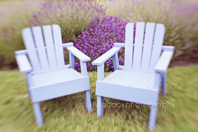 lavender farm Washington state