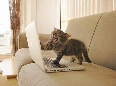 Gato ataca notebook por causa da conexão