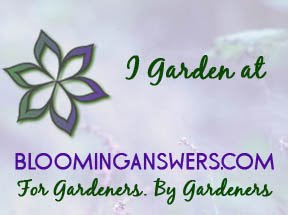 Bloominganswers.com