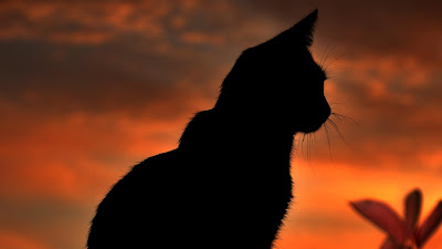 cat in front of orange sky dawn wallpaper 1920x1080 very beautiful
