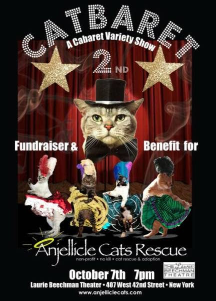 Anjellicle Cats Adoption