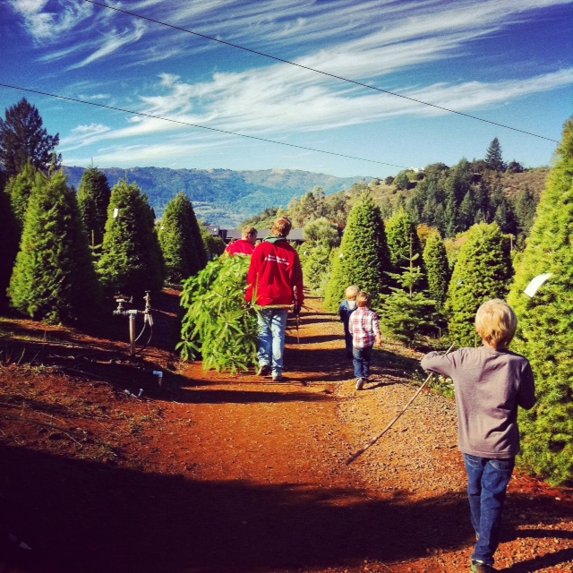 Moon Mountain Tree Farm