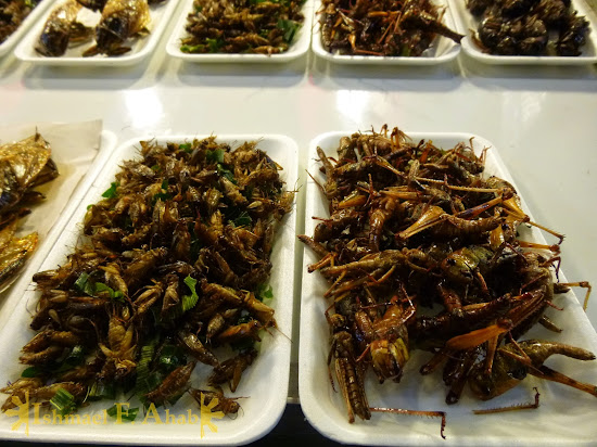 North Thailand - Yummy Bugs in Chiang Rai