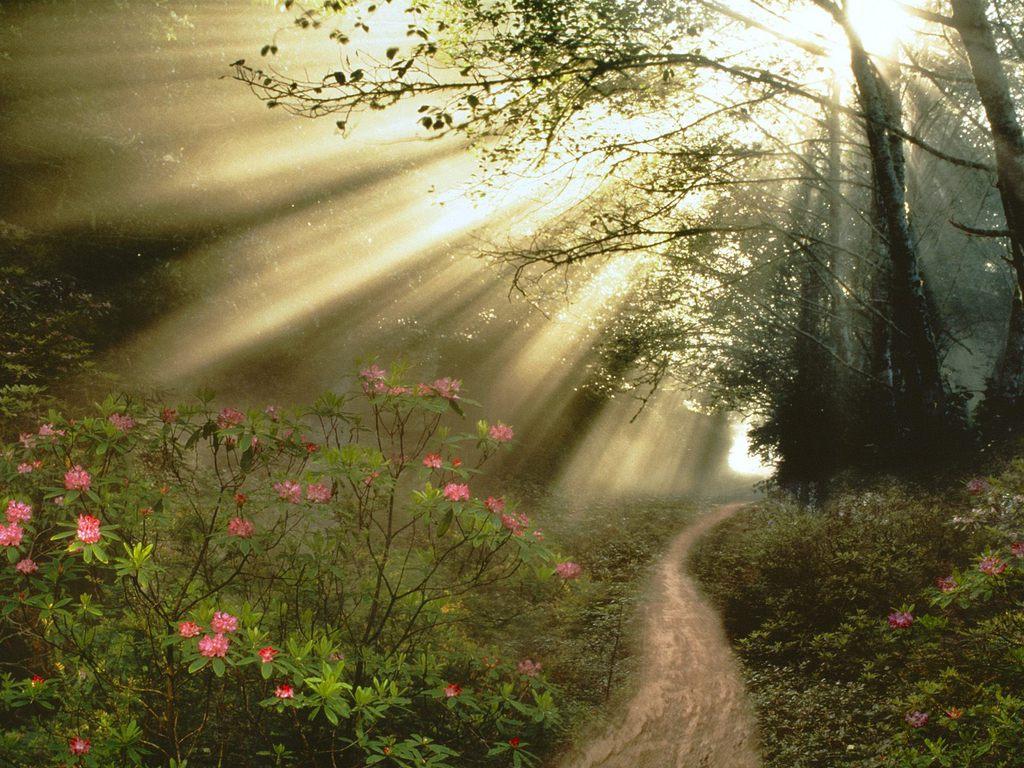 http://4.bp.blogspot.com/-7d59t0M76DY/TdJpVfwoB6I/AAAAAAAAAWc/GiPlQqtn1sQ/s1600/Streaming-Sunbeams.jpg