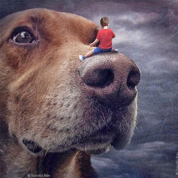 Cachorros manipulados – Bem Legaus