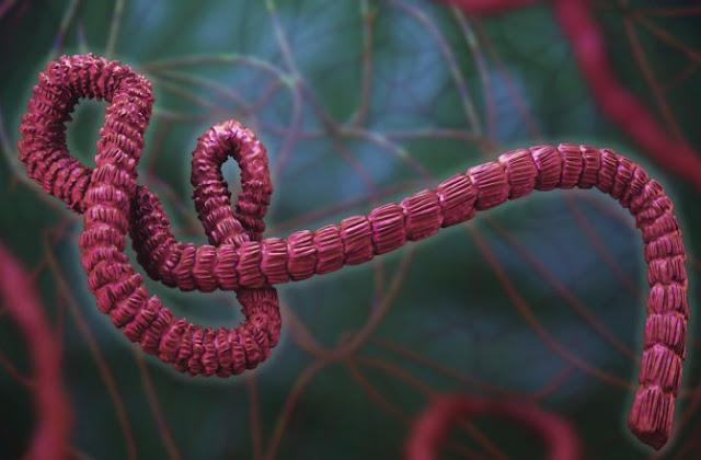 Ebola_Vaccine