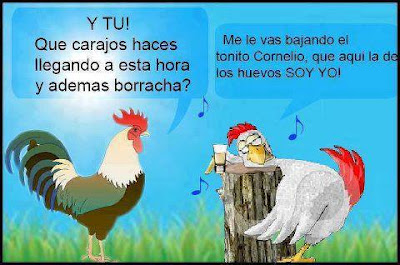 Fotos graciosas de gallinas