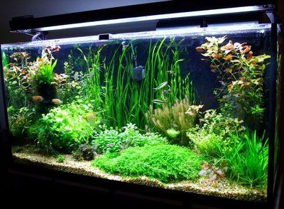 3d fish tank wallpaper 3d wallpaper box for 3d fish tank