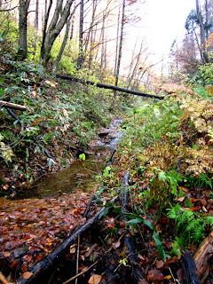 枯れ葉で埋まった細い谷
